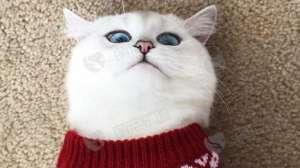 猫咪一直打嗝怎么办?